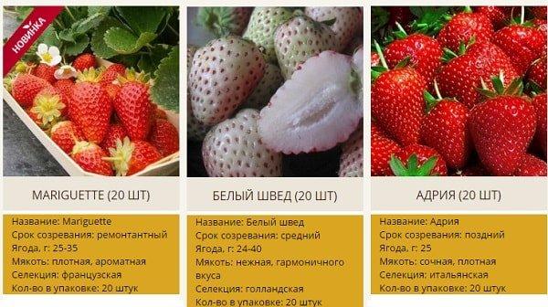 Выбор сорта клубники