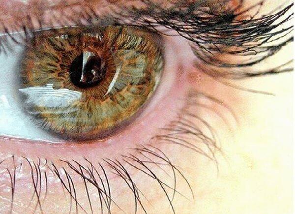 Наука о зрении – офтальмология