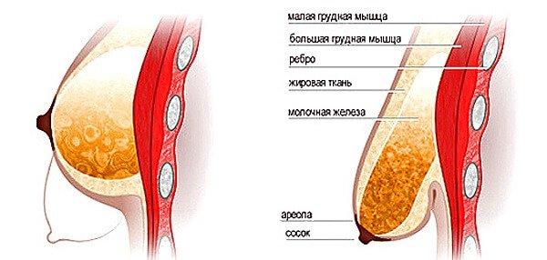 Как восстановить обвисшую грудь? Способы и упражнения.