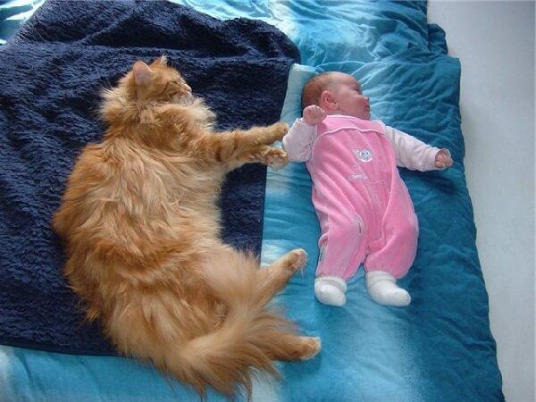 Новорожденный и животное в одном доме.