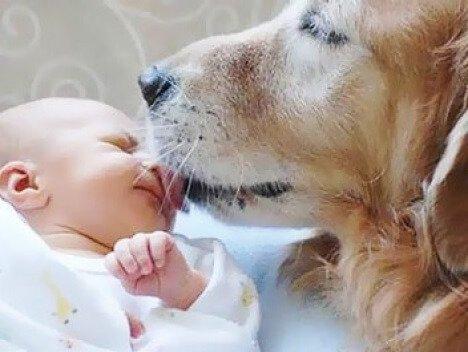 Младенец и собака в одном доме.