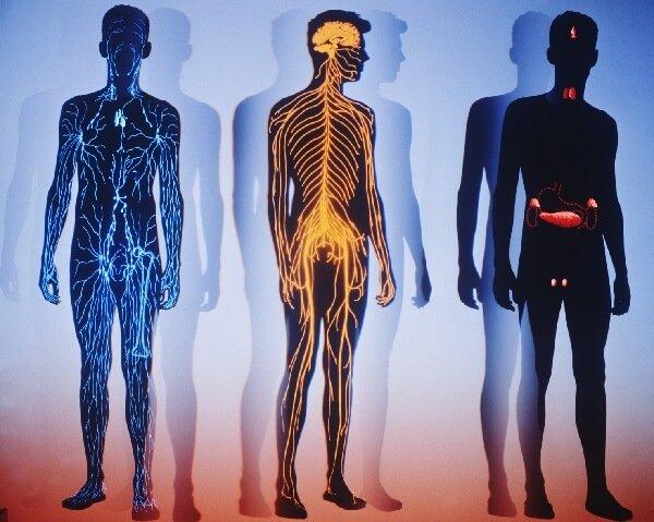 Сигналы тела о состоянии здоровья организма.