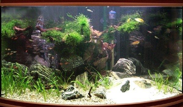 process-obsluzhivaniya-morskix-akvariumov