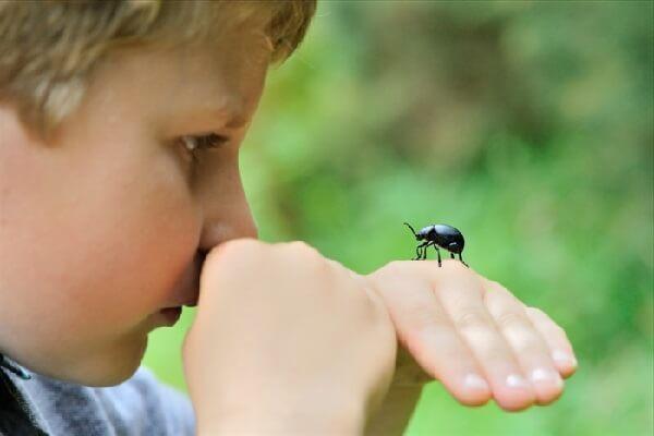 Ребенок боится насекомых – как избавиться от страха?