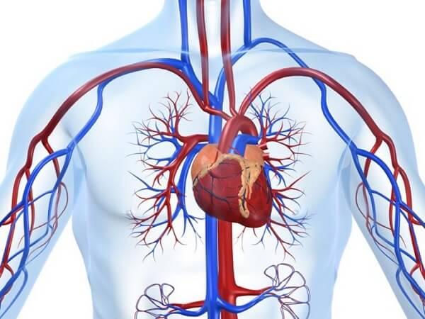 Болезни сердца и кровеносных сосудов.