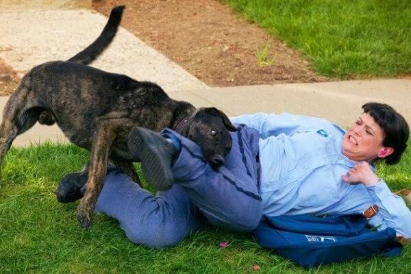 Что делать при нападении собаки? Правила поведения и советы.