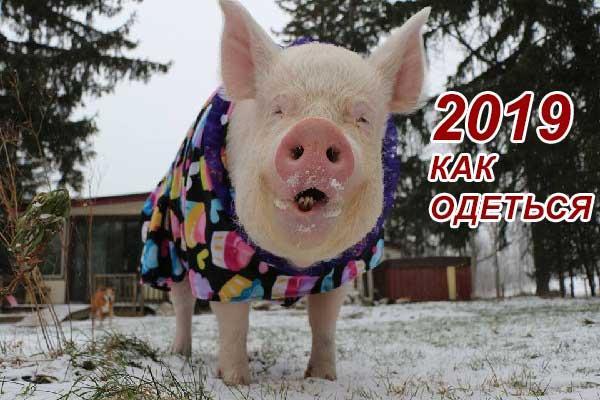 Что надеть на Новый Год 2019 Свиньи - наряды по цвету с фото.
