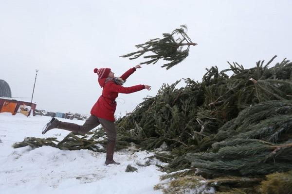Куда девать новогоднюю елку?