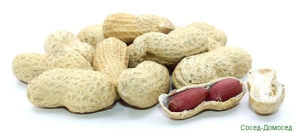 Арахис каждый день? 10 причин чаще кушать арахис.