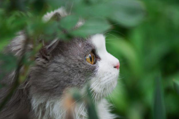 Котенок кусается и царапается – что делать? Причины и как отучить.