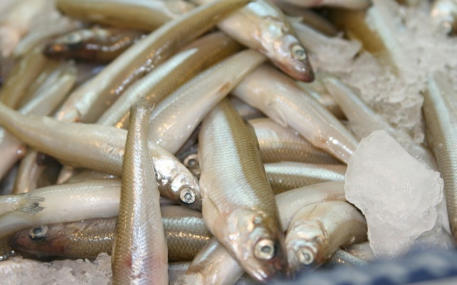 Корюшка – виды рыбы, польза и вред, рецепты приготовления.