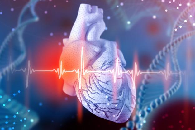 Из исследований сердечно-сосудистой системы человека – 12 фактов.