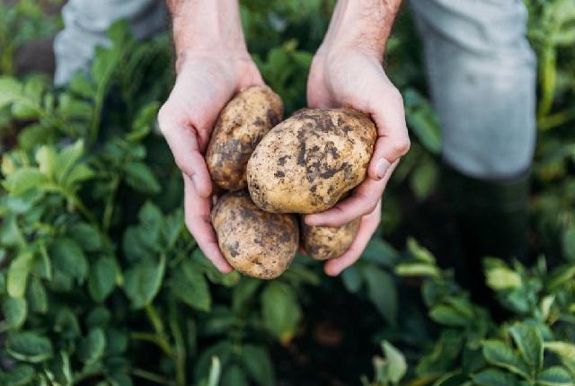 5 преимуществ картофеля для здоровья.